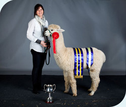 2014 BAS National Show Supreme Huacaya